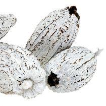 Kakaofrugter vasket hvid 15stk