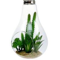 Kaktus i glas til at hænge 21 cm