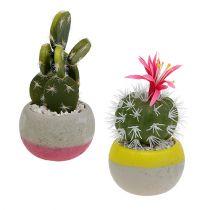 Kaktus i en grydeblanding H13cm 4stk