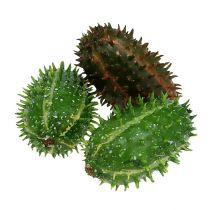 Figenkaktus 5cm grønbrun 6stk