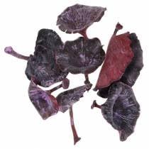 Kalix champignon lilla, hvidvasket 100stk