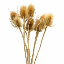 Tørrede blomster tidsel natur 8stk