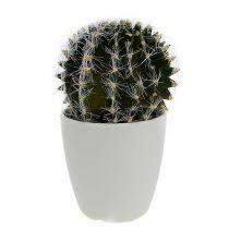 Kaktus i en gryde grøn 14 cm