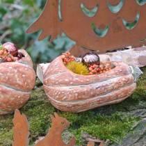 Græskar til plantning Orange 28 × 15 × 14cm