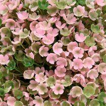 Kugleplante lyserød-grøn Ø18cm 1p