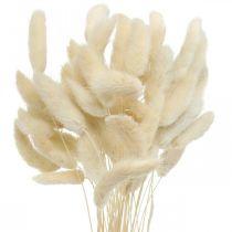 Lagurus tørret kaninhale græs bleget 40-50cm 50stk