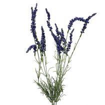 Lavendelbusk 55cm blå