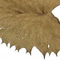 Lotus blade tørret natur tør dekoration lilje pad 50stk