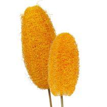 Luffa stor på en pind gylden gul 25stk