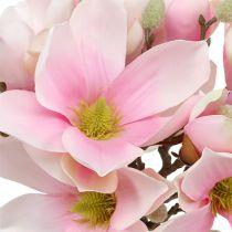 Magnolia bundt pink 40cm 5stk