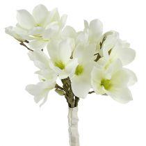 Magnolia bund hvid 40cm 5stk