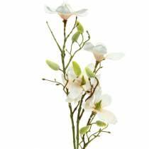 Magnolia fersken 85 cm