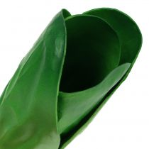 Dekorativ vegetabilsk chard 25,5 cm