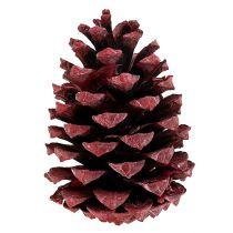 Maritima kegler 10-15 cm rød frostet 12stk
