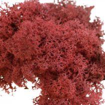 Dekorativ mos til kunsthåndværk Rød naturlig mos farvet i en 40 g pose