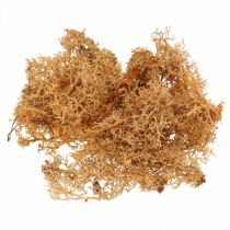 Dekorativ mos til kunsthåndværk Orange farvet naturmos bevaret 40g