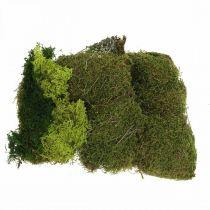 Dekorativ mos til kunsthåndværk blandet grøn, lysegrøn naturlig mos 100g