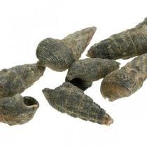 Naturgenstande, naturlige snegleskaller 6–10 mm, marine dekorationer 1 kg