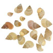 Naturlige snegelmusler 1 kg
