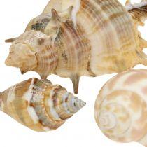 Shell mix naturlig assorteret 260g