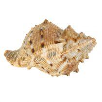 Musling sortiment naturligt 500g