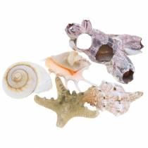 Shell mix naturlig assorteret 5stk