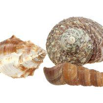 Shell mix til maritim dekoration natur 400g