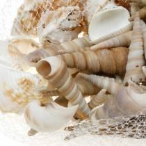 Muslingeblanding og snegleskaller i et naturligt 400g netto