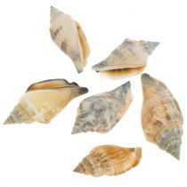 Shell mix naturlig 3cm - 5cm 200g