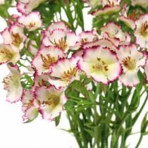 Nelliker i en bunke hvid, lilla 34 cm