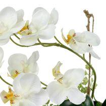 Phalaenopsis orkidé til hængende H26cm fløde