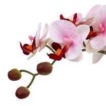 Orkidérosa i keramisk gryde 31 cm