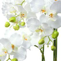 Orkidé hvid med kloden 110cm