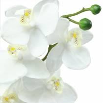 Orkide hvid 77cm