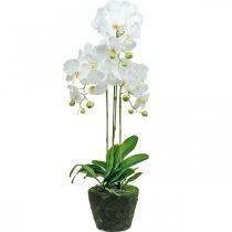 Kunstige orkideer til den hvide potte 80cm