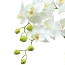 Orkidé hvid på jordkugle 65cm