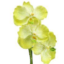 Orkidé med rødder lysegrøn L43cm
