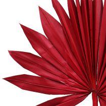 Palmspear Sun mini rød 50stk