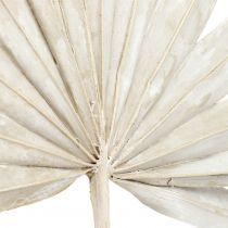 Palmspear Sun mini hvidvasket 50stk