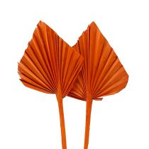 Palmspear mini Orange 100stk