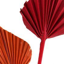 Palmspear assorteret rød / orange 50stk