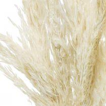 Pampas græs tørret bleget tør dekoration 65-75cm 6stk i en flok
