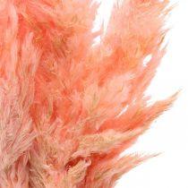 Pampas græs tørrede lyserøde tørre blomster 65-75cm 6stk i en flok