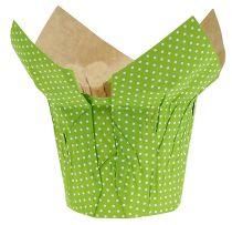 Papirkrukke Ø10cm H8cm grøn 8stk