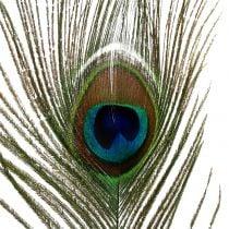 Påfuglfjedre 22cm - 30,5 cm 12stk