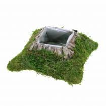 Plantepude mos, bark 20cm × 20cm