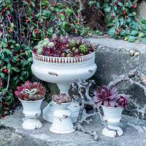Plantebæger Chalice Antique Cream Ø7.5cm H9cm 1p