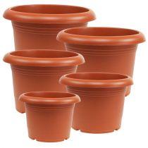 "Plante potte ""Oliver"" terracotta Ø15cm - 45 cm, 1 stk"