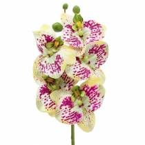Kunstig orkidégren Phaelaenopsis Grøn Pink H49cm