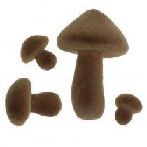 Flokede svampe brun 12stk